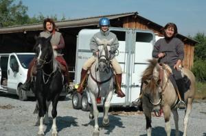accueil chevaux atelages