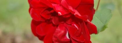 rose grange floriejean