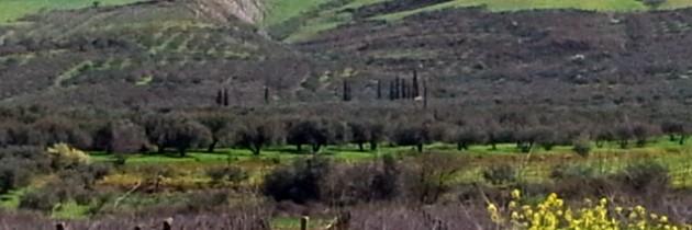 Grange FlorieJean huile d'olive crétoise