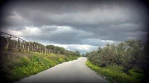 Huile d'olive Crétoise