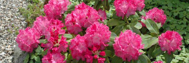 fleurs de la grange floriejea 03