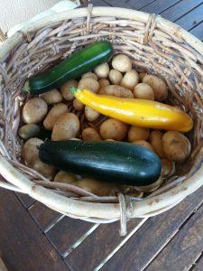 courgettes du potager de la Grange Floriejean