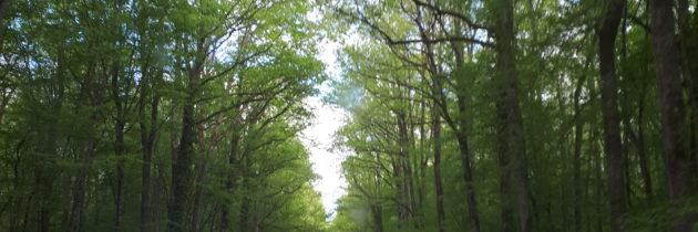 forêt d'exception Tronçais